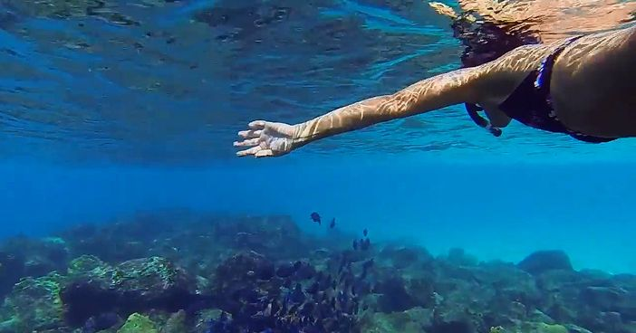 Things to do in Willemstad, Curacao: Snorkel tour