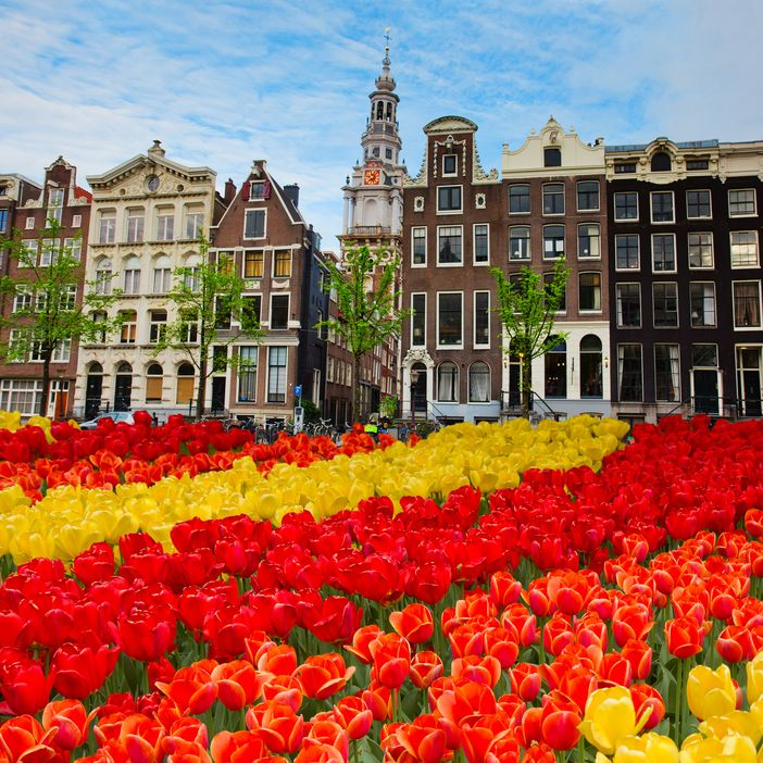 Colorful tulips in Amsterdam, Netherlands